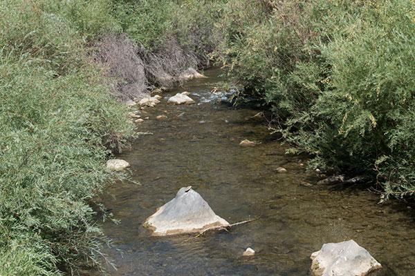 New Mexico Stream DASWCD
