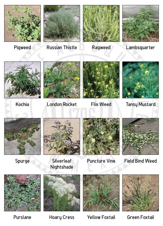 Weed Grid